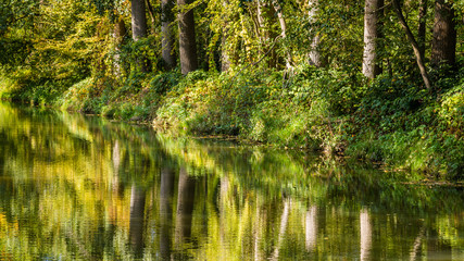 Fresh green trees reflecting in a little river in the Netherlands