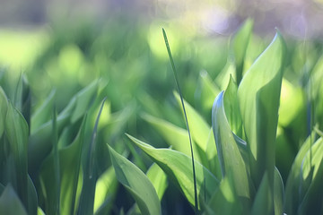 spring greens background, abstract blurred nature beautiful pictures, green shoots