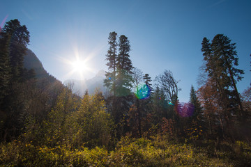 Landscape beautiful mountains with forest and pines and blue sky with sun rays and highlights in the Caucasus in Russia Dombay