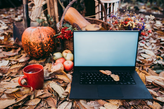 Using technologies for autumn shopping