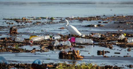 Egretta garzetta walking between many plastic bottles and garbage