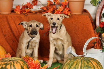 Two puppies on autumn background. Animals, doggy.
