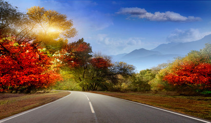 Fotomurales - Asphalt road in early autumn with red and yellow leaves