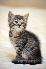 small striped kitten on a light background