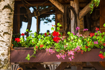 Flowers in a window box in the summer