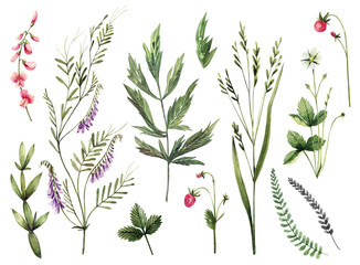 Set of watercolor wild herbs and flowers. Hand-drawn floral elements.