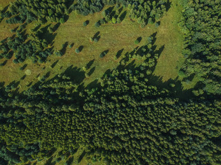 The border between the forest and the field in summer from the height of the quadrocopter