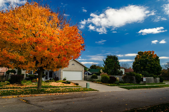 Autumn orange maple tree on a manicured street against a cloudy blue sky.