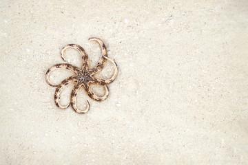 Starfish shell on beach