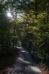 Wanderweg durch Wald im Herbst
