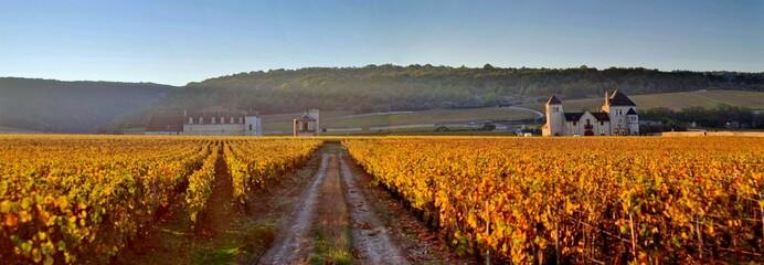 Vignoble du Clos de Vougeot sous le soleil d'automne.