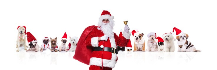 santa claus ringing his bell in front of christmas dogs