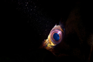 Close up of a Tree fish eye