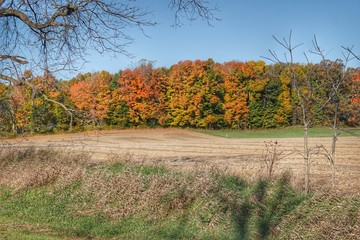 Fall on Piersonville Road