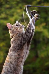 Vier Monate altes Kätzchen fängt Spielangel Katzenspielzeug