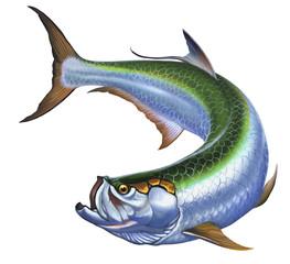 tarpon big fish on white
