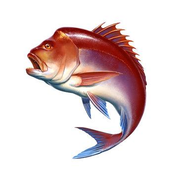 Snapper red big fish