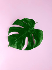 Monstera leaf Close-up photo in minimalistic style Lush tropical leaf on pink background Flat lay