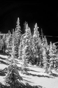 Infrared winter scene, Cedar Breaks National Monument 2