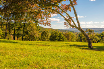 Beautiful autumn mountain view featuring tree and grass on the foreground and mountains on the background. Photo was taken at Delaware Water Gap, PA