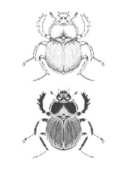 Vector illustration with hand drawn scarab. Two variants of insect: outline and silhouette. In realistic style.