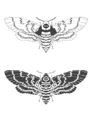 Vector illustration with hand drawn dead head moth. Two variants of insect: outline and silhouette.