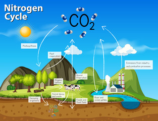Science nitrogen cycle CO2