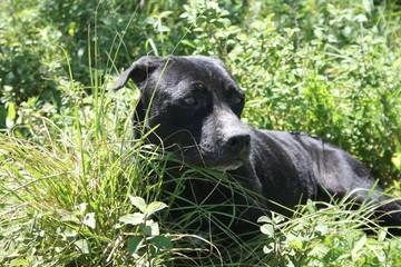 Stray dog of Costa Rica