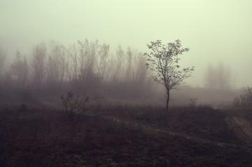Haunting foggy landscape Fototapete