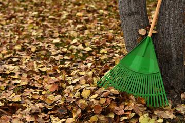 Green Garden Rake and Autumn Leaves