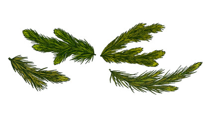 Coniferous tree green branches iIsolated on white background. Vector set. Christmas festive nature pine branches.