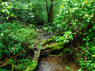 Small swamp in the mountain on Khao Luang mountain in Ramkhamhaeng National Park,Sukhothai province Thailand