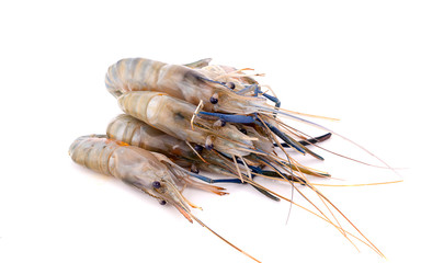 Fresh shrimp isolated on white background. This has clipping path.