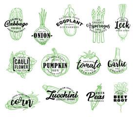 Organic vegetables harvest, vector lettering