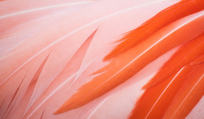 Beautiful close-up of pink and orange flamingo feathers forming a full-frame texture background