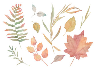 Watercolor floral  set. Hand drawn isolated illustration. Botanical art background. Autumn leaves