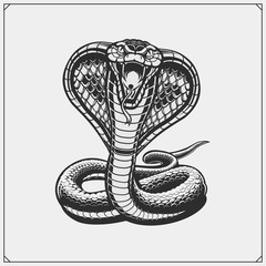 The emblem with king cobra for a sport team.