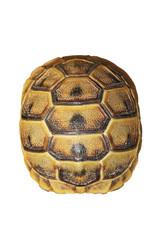 greek turtoise shell on white background