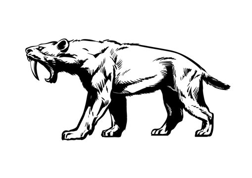 Saber toothed tiger. Smilodon. Saber-toothed cat. Hand drawn sketch style vector illustration isolated on white background.