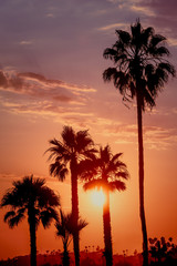 Silhouetted Palm Trees at Sunset Southern California