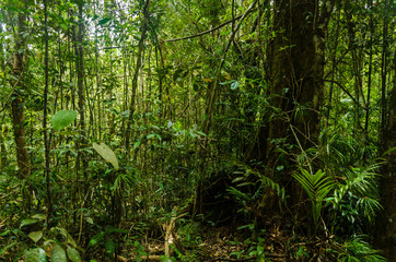 Kinabalu National Park, SAbah, Malaysia