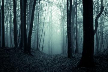 dark scary forest path, fantasy landscape