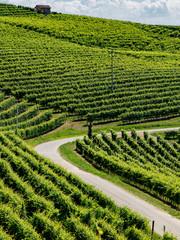 Vineyards near Barbaresco, Cuneo, in Langhe