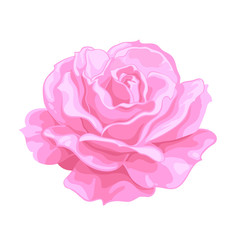 Pink rose. Open bud, Realistic hand drawn vector illustration .