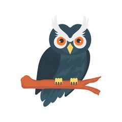 owl   bird  Halloween