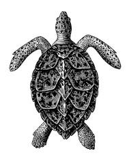 Hawksbill Sea Turtle Engraving Vintage Illustration