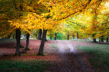 Colorful autumn forest with trails