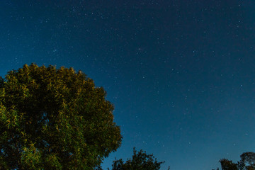 Starry sky with a lilac bush