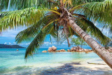 Wall Mural - Tropical beach with palm and turquoise sea.  Summer vacation and travel concept.