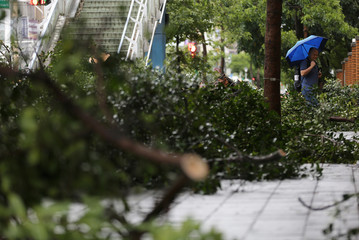 A man tries to walk past a fallen tree on a street in Taipei after Taiwan braced for Typhoon Maria
